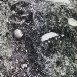 VHN-Гроб-3-снимка-на-място