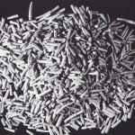 VHN-41-Dentalium
